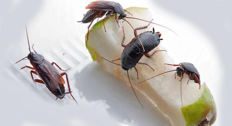 Причините за появата на хлебарки в апартамента